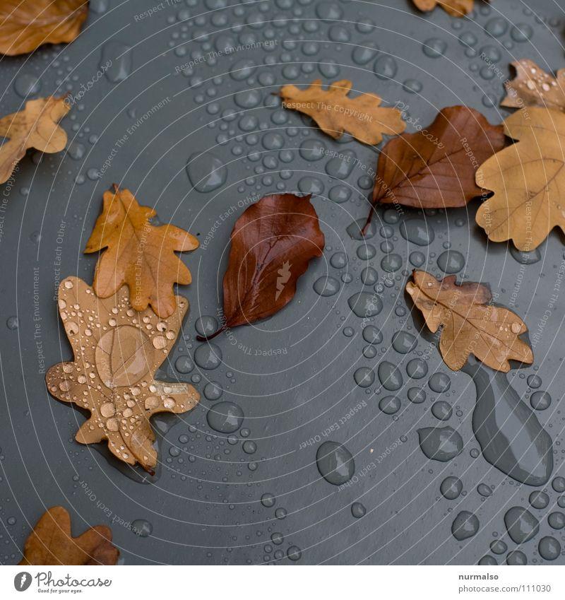 Herbstgrau Wasser Baum Blatt braun Regen Wassertropfen Vergänglichkeit Seil Kunststoff Statue Pfütze Abdeckung Eiche Eicheln