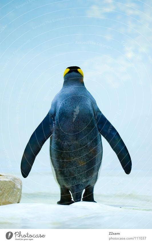 auch ein Rücken kann entzücken... Himmel blau Tier gelb kalt Sand Stein lustig Eis Vogel süß stehen Flügel Feder Mitte