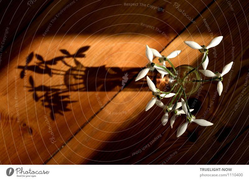 Schneeglöckchen im Glas 2 Lifestyle elegant Stil Design Häusliches Leben Wohnung Dekoration & Verzierung Raum Holzfußboden Natur Pflanze Wasser Schönes Wetter