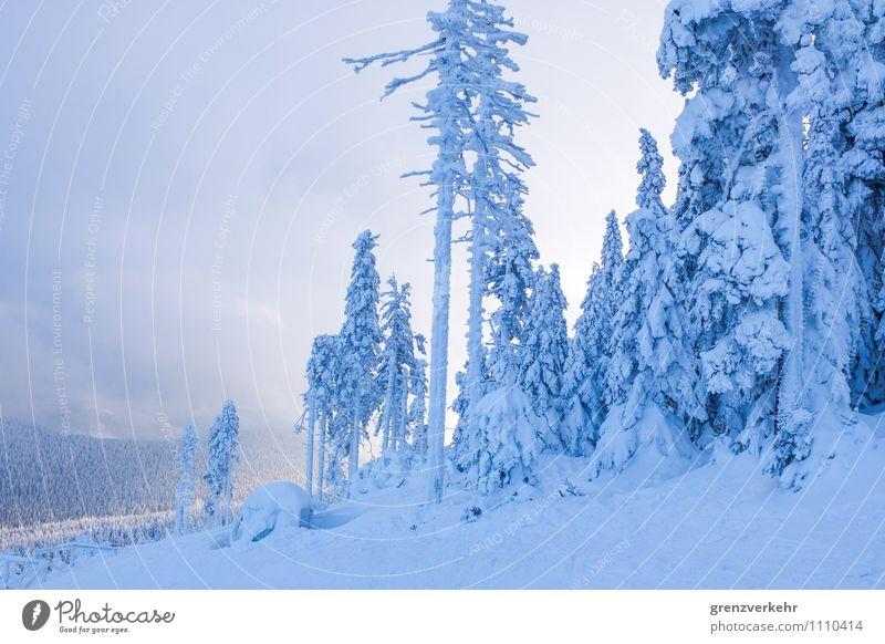 Wintersonne blau Wald Berge u. Gebirge Schneefall Schneebedeckte Gipfel Skifahren Skigebiet Schneelandschaft Winterurlaub Skipiste Sonnenuntergang