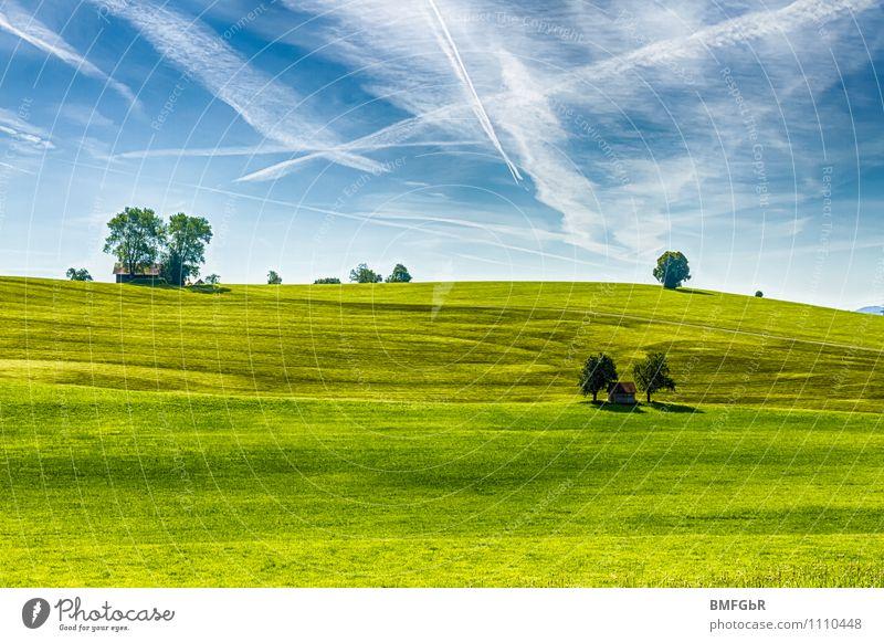 schlichte Schönheit der Natur Umwelt Landschaft Pflanze Himmel Wolken Klima Klimawandel Schönes Wetter Baum Gras Park Wiese Hügel Zufriedenheit Bewegung