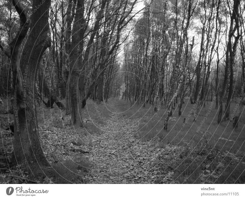Waldweg-bw Natur Wald Wege & Pfade Märchen
