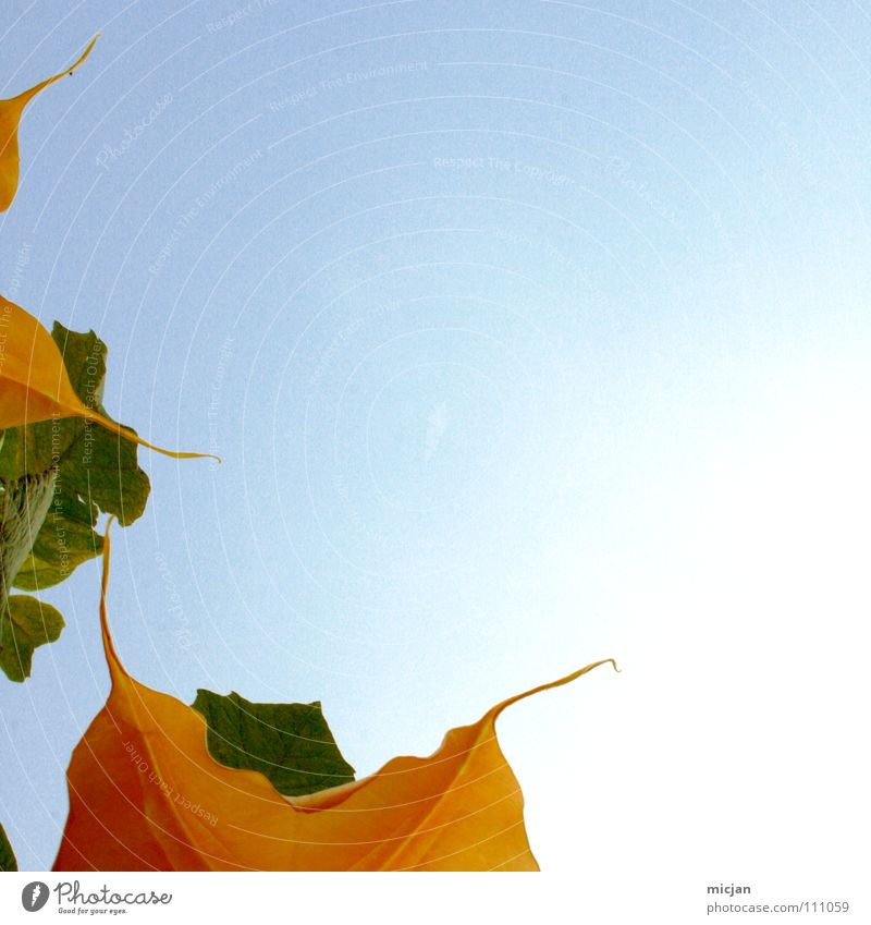 Zipfelchen Himmel Natur blau schön Pflanze Blume Sommer Blatt gelb Farbe Garten Blüte orange Wildtier Stern (Symbol) Spitze