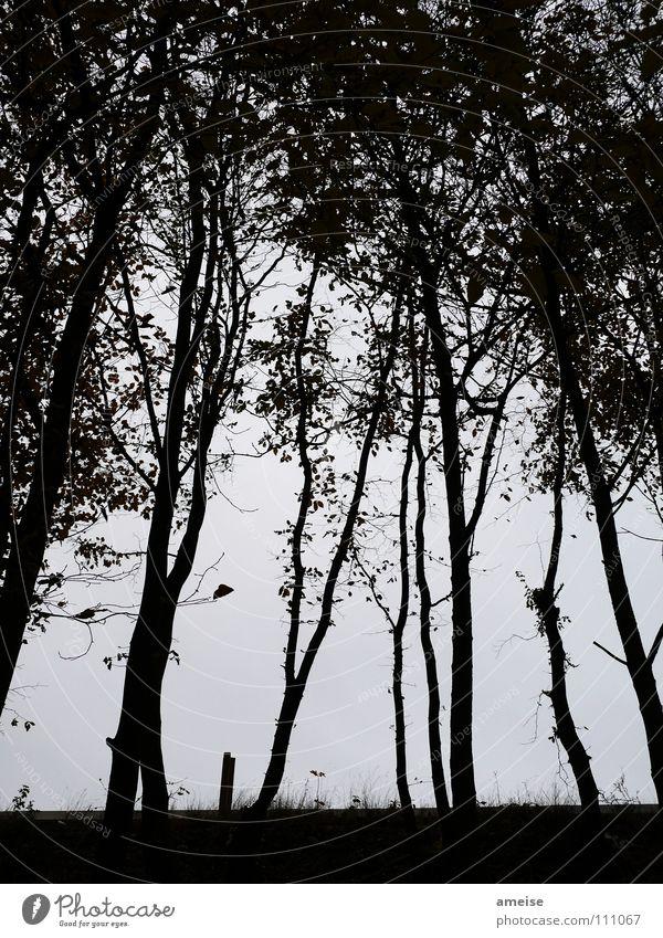 viele kleine Bäume Baum Blatt dunkel Gras Abend Nebel ruhig Einsamkeit schwarz Schwarzweißfoto Herbst Kontrast s-bahnline Schönes Wetter Herbstbeginn Angst