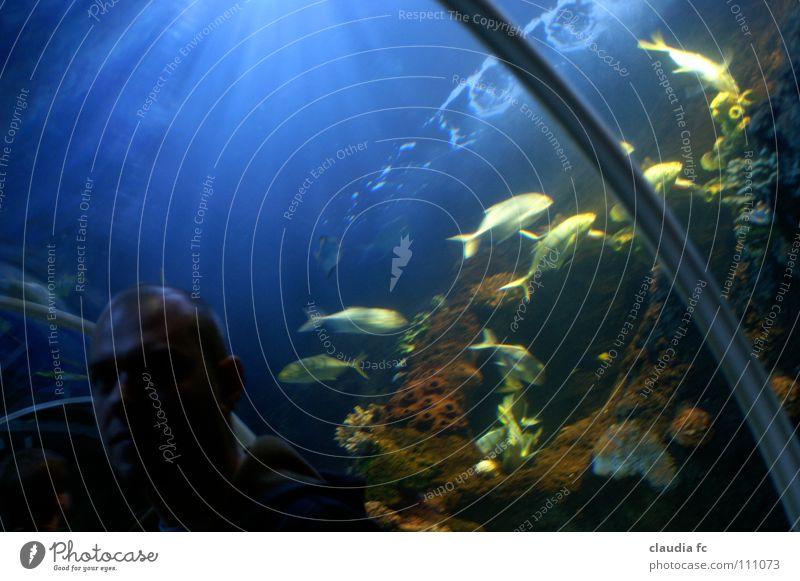 underworld Wasser Meer Farbe Fisch Tunnel Aquarium Schwarm Lichteinfall