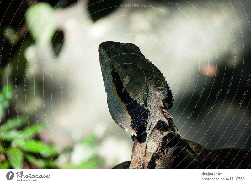 Sonnenbad Natur Ferien & Urlaub & Reisen grün Sommer ruhig Tier schwarz Stil außergewöhnlich glänzend Park Zufriedenheit elegant genießen beobachten
