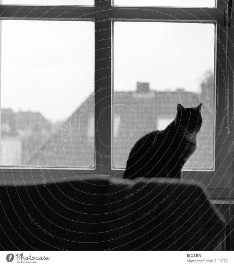 felis catus Tier dunkel Herbst Katze beobachten Idylle Säugetier Haustier Nachmittag Hauskatze Alltagsfotografie
