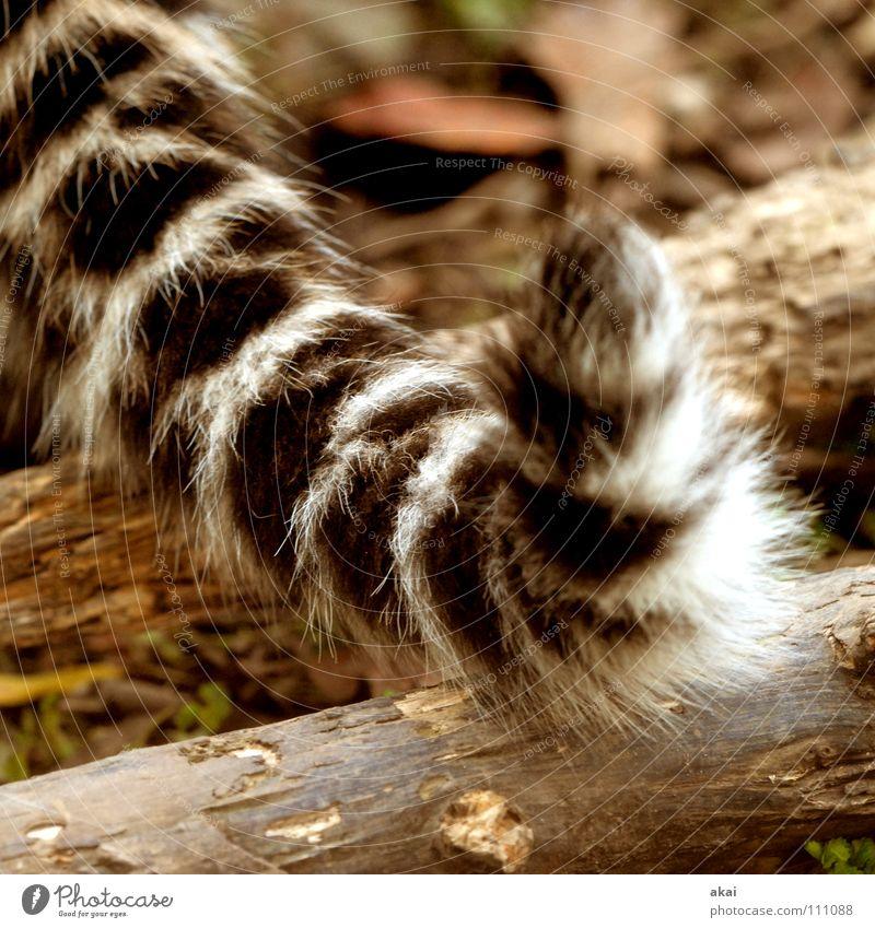 Schwanz ruhig Tier Spielen Kraft Angst Lebensmittel Suche Konzentration Jagd Appetit & Hunger Kontrolle Wachsamkeit Fleck Säugetier exotisch