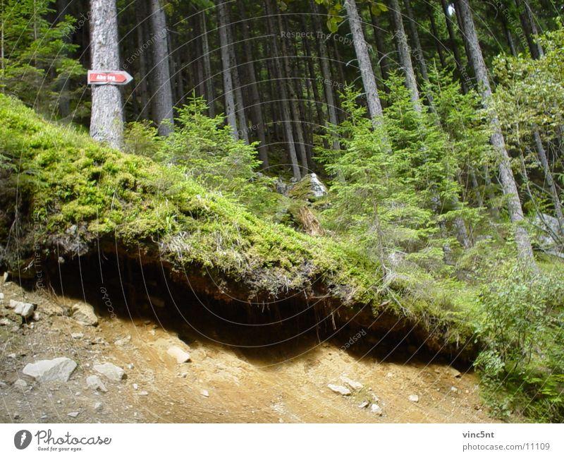 Abstieg Wald Wand Berge u. Gebirge Sand Schilder & Markierungen
