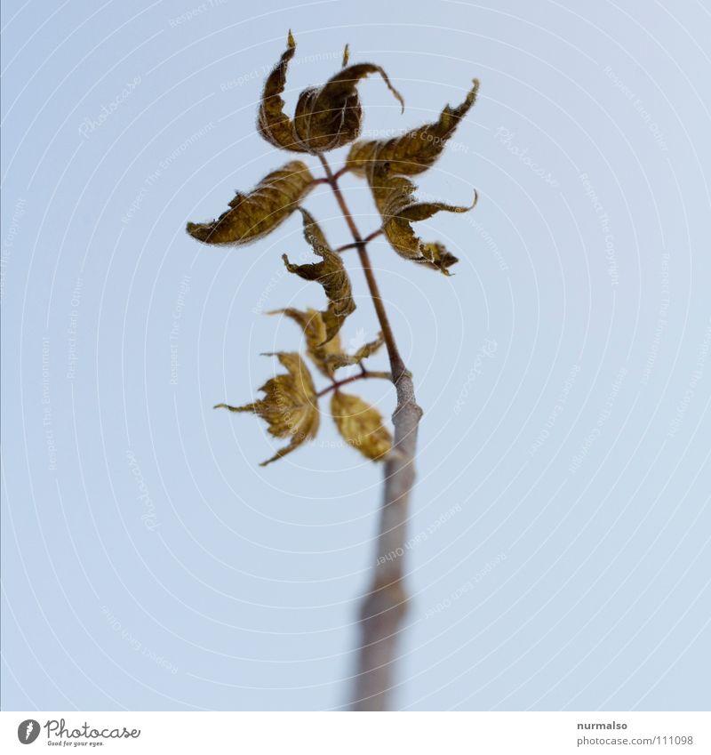 Herbstende Blatt wenige braun Tau Morgen Verfall Endzeitstimmung Atomkrieg letzte Angst Panik Blattverlust Stab Ast Baumstamm Ende Skuriel Mitte das letzte welk