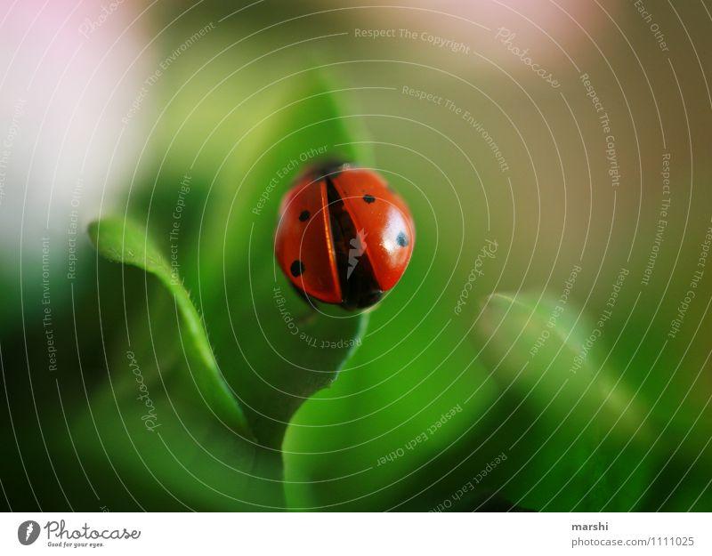 Glücksbringer Natur Pflanze Frühling Sommer Blume Sträucher Grünpflanze Tier 1 Stimmung Marienkäfer tierisch Insekt Blattgrün Garten Farbfoto Außenaufnahme