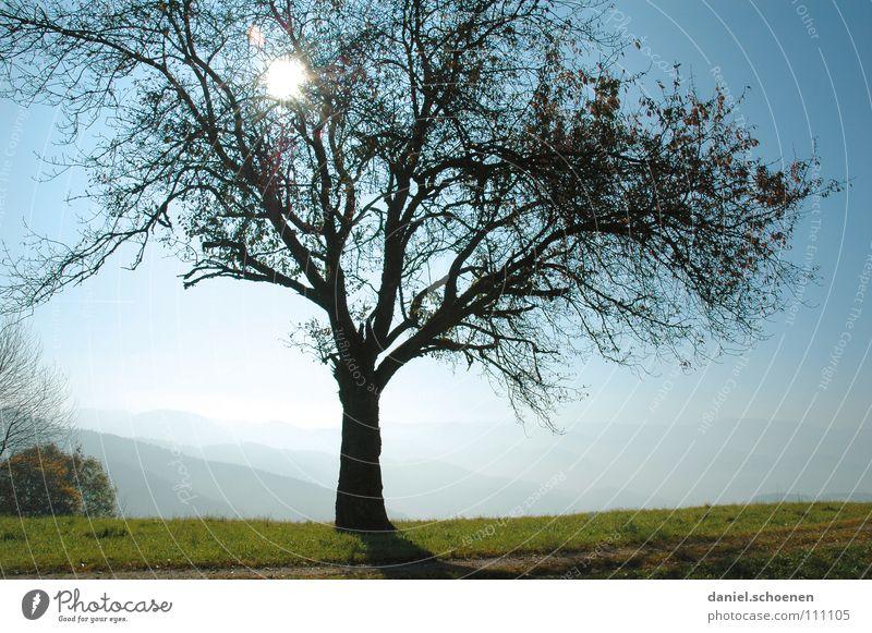 Picknickplatz Himmel Natur blau grün schön Baum Sonne Wiese Herbst Nebel Hügel Bildausschnitt Anschnitt herbstlich Geäst Schwarzwald