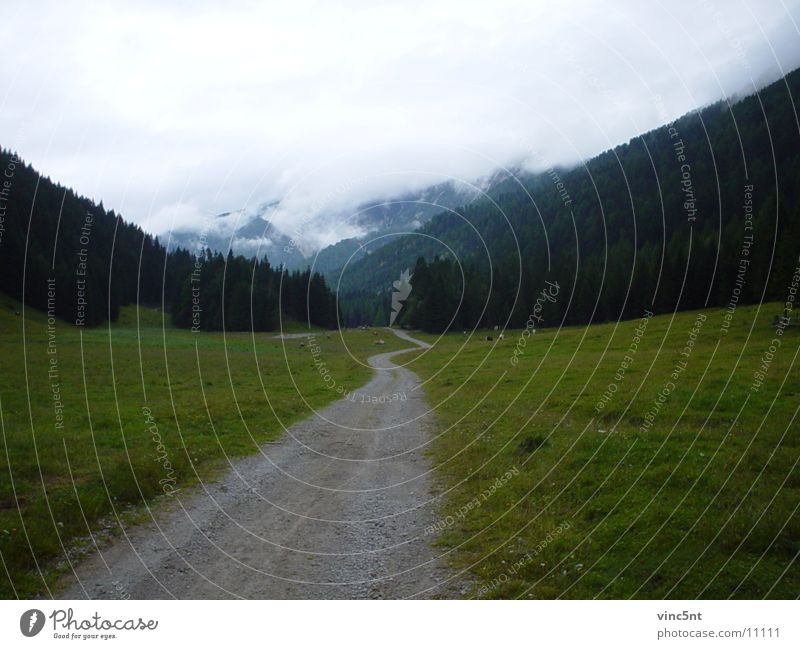 VerhangeneWiese Wolken Wald Berge u. Gebirge Nebel Fußweg Forstweg