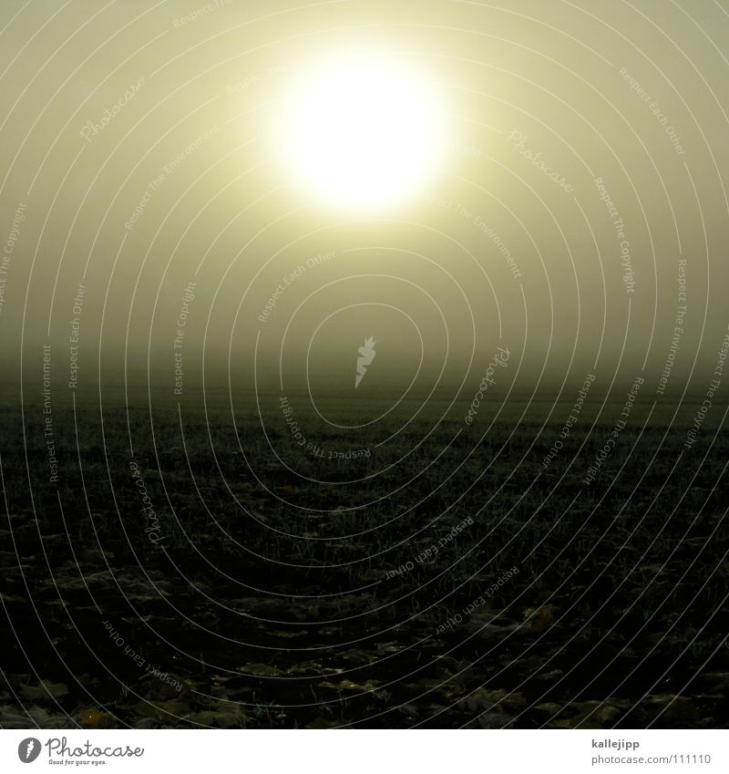 nebelleuchte Sonne Winter Freude Wiese kalt Erde Horizont Erde Feld Nebel Wildtier Wassertropfen Bodenbelag Boden Frost lesen