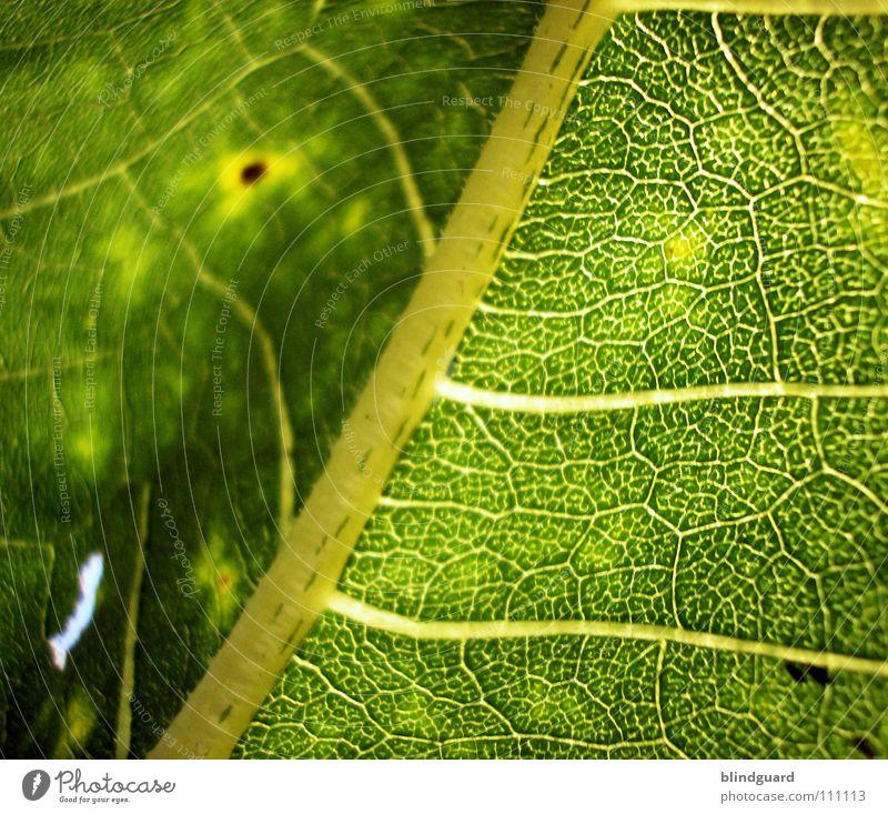 Structure to Blur weich Unschärfe Blatt Physik fein Geäst Sonnenblume grün Pflanze Biologie frisch grasgrün saftig Gärtner Sommer Perspektive Ranke gedeihen