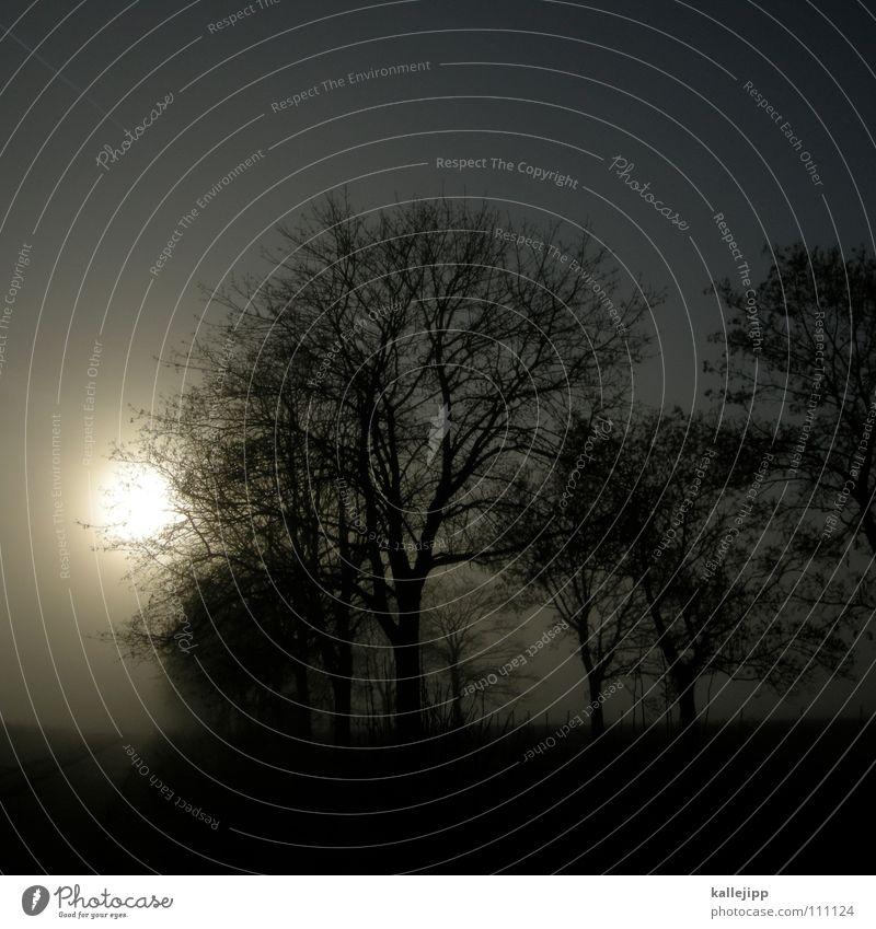 grauzone Morgennebel Horizont ungewiss Reh Baum Allee Straßenverkehr Unfallgefahr Auffahrunfall Hirsche Bauernhof Wohnsiedlung Nebel Tau Wassertropfen