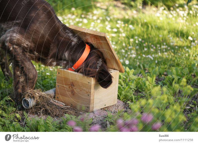 Neugierde im Frühling Hund Natur Pflanze Sommer Freude Tier Umwelt Leben Wiese Gras Spielen Holz Glück Garten frei