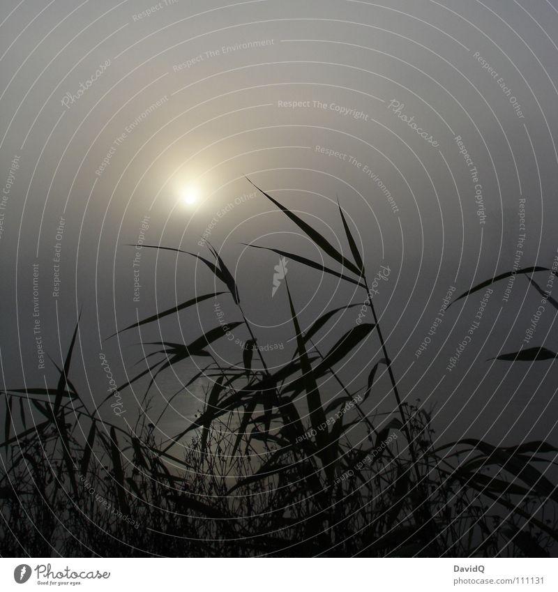 Nebelsee Wasser Sonne ruhig dunkel kalt Erholung Herbst grau See Beginn Zukunft Frost Fluss Schilfrohr Tau
