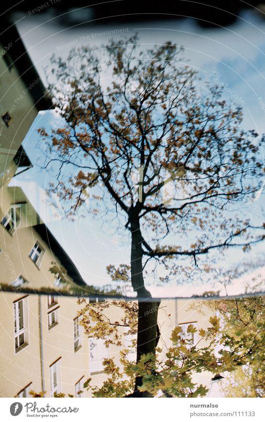Wurzelbaumast II Reflexion & Spiegelung Baum Windschutzscheibe Blatt Herbst Nachbar Fenster Fassade Luft unten verkehrt entgegengesetzt Holz hart fällen