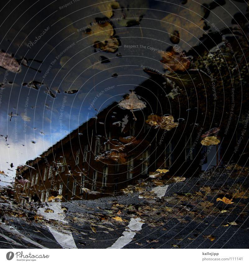 fade to grey Pfütze Herbst Reflexion & Spiegelung Haus Wohnung Mieter Vermieter Blatt Baum laublos nass feucht grau schlechtes Wetter Tiefdruckgebiet tief Sturm