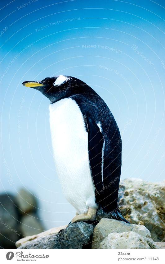 nachdenklich Himmel Hand blau Ferne Tier gelb kalt Sand Stein Denken lustig Vogel Eis süß stehen Feder