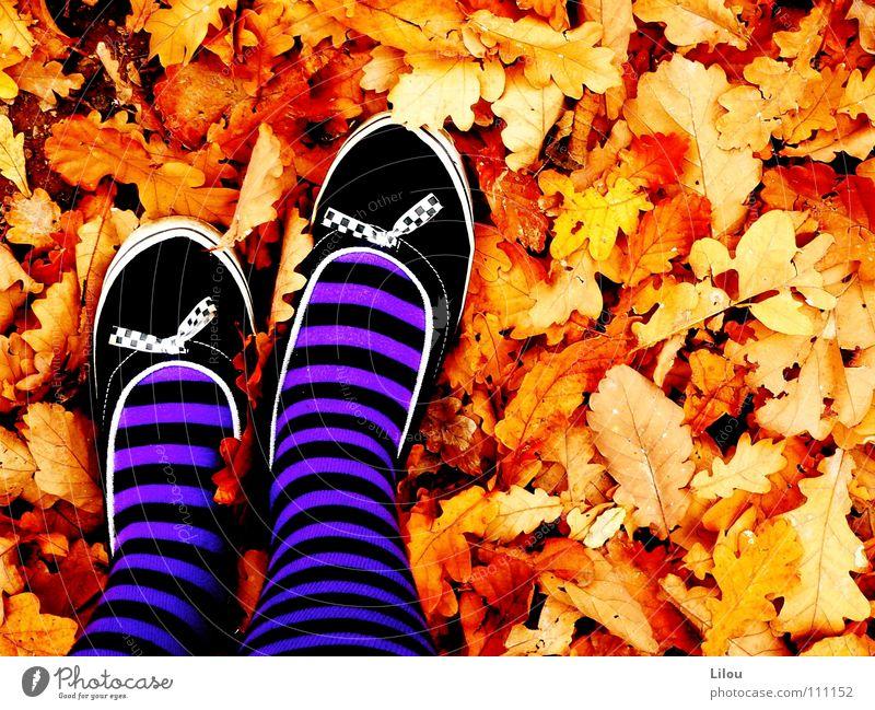 Autumn's Witch. Herbst Blatt mehrfarbig rot gelb braun weiß schwarz violett Schuhe Lieferwagen Strümpfe Streifen Kreis alternativ Hardcore Junge Frau autumn
