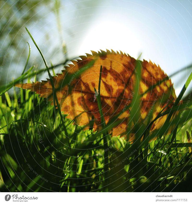Blattigel grün Herbst Wiese Gras Seil frisch Rasen Punkt Halm Fleck Stachel stachelig scheckig Zacken Igel
