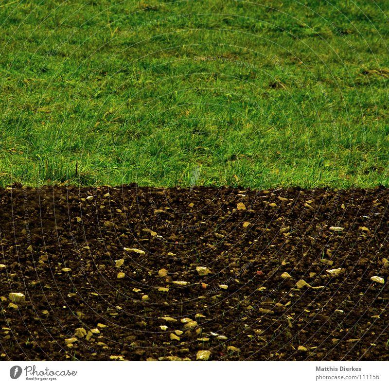 border Feld Wiese Herbst Sommer Landwirtschaft Arbeit & Erwerbstätigkeit Horizont trist Trauer Botanik Jungpflanze Nebel Herbstwetter Regen Ordnung verzweigt