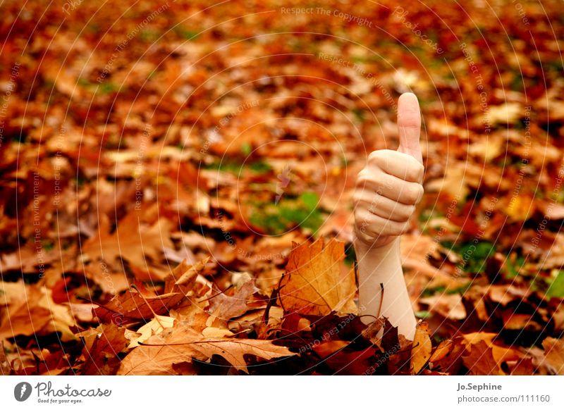 I feel good! Hand Herbst Wald braun orange Erfolg skurril Daumen gestikulieren untot Herbstlaub verstecken außergewöhnlich Bedeutung OK Textfreiraum links