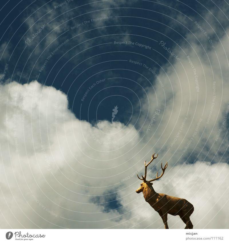 100 - Rückblick Himmel blau Ferien & Urlaub & Reisen Tier Wolken gelb Gefühle Erde Wetter Kraft gold neu Macht beobachten Fell Vergangenheit