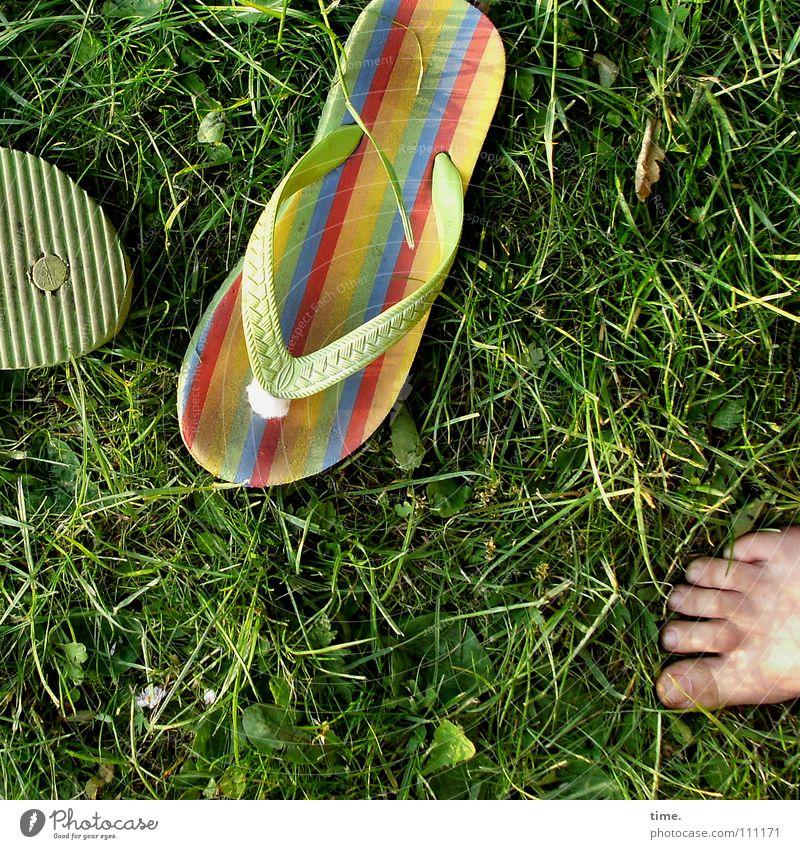 Sommertheater mehrfarbig Freude Leben Freizeit & Hobby Ferien & Urlaub & Reisen Fuß Gras Wiese dreckig stachelig grün Sandale 3 Barfuß Rasen