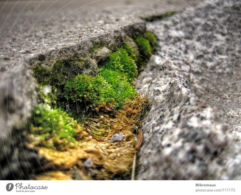 Ohne Moos nix los grün Pflanze Berge u. Gebirge Wege & Pfade Stein Felsen Wachstum weich Furche hart Spalte Gletscherspalte Mineralien Mikrofotografie Granit