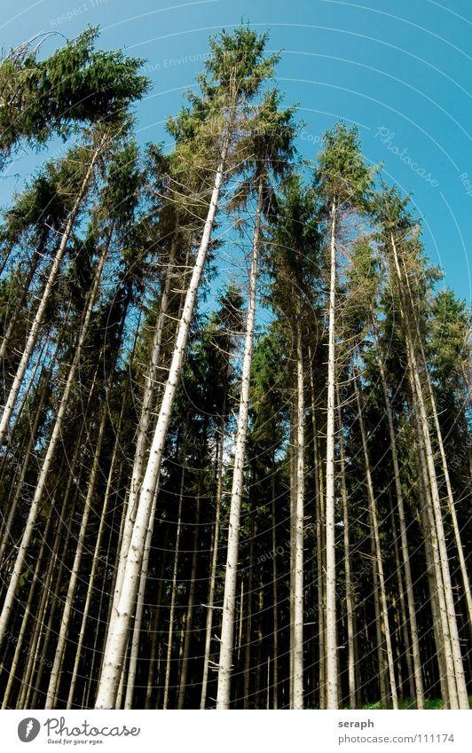 Waldsterben Baumstamm Tanne Weihnachtsbaum Nadelwald Holz Fichte Zerstörung Baumrinde Natur Pflanze Abholzung Ast Hintergrundbild Landschaft Tod Botanik Linie