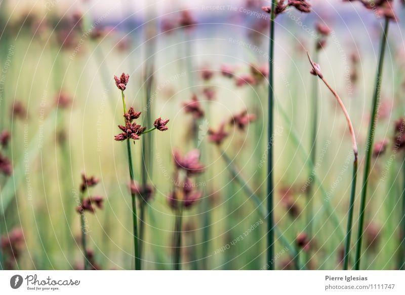 Blumen im Feld Ferne Freiheit Pflanze Erde Frühling Sommer Klima Wetter Schönes Wetter schlechtes Wetter Gras Blüte Grünpflanze Garten Wiese atmen stehen frisch