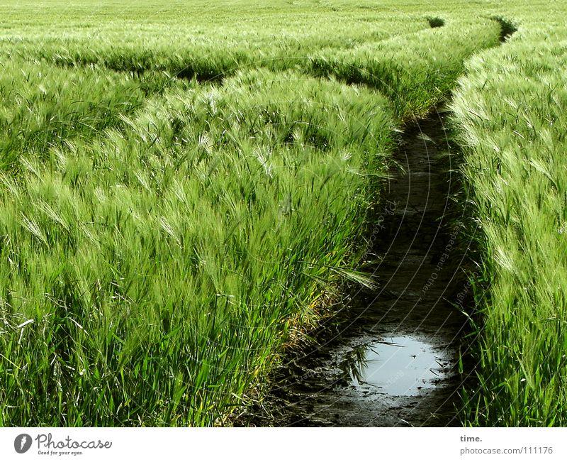 Schwungvoll ins Unbekannte Wasser grün Pflanze schwarz Ernährung Frühling Wege & Pfade Sand Zusammensein Feld Wellen Lebensmittel Wind nass Horizont Erde