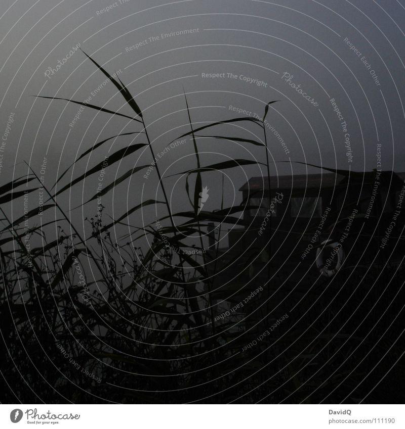 düster Gewässer See Teich Binnensee Nebel Morgennebel grau schlechtes Wetter dunkel ungemütlich Tau Waschhaus Wasserfahrzeug Hausboot Rettungsring ankern
