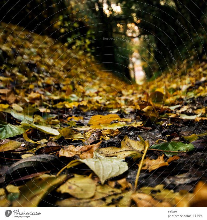 Herbstweg Baum grün Blatt gelb Wege & Pfade Erde Bodenbelag herbstlich Goldener Schnitt