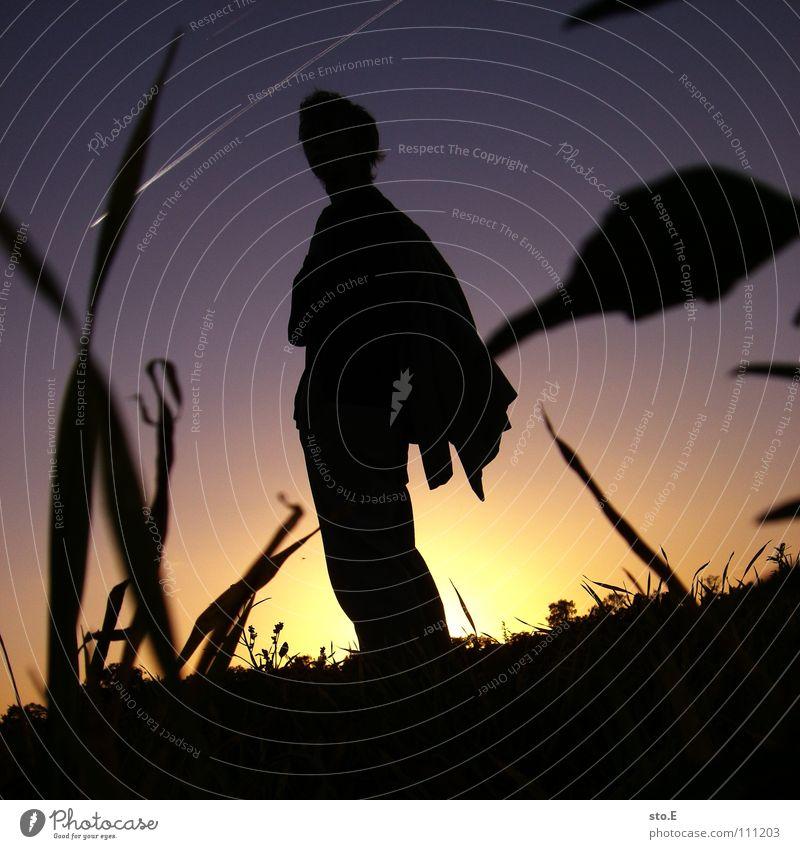 going home pt.1 Kerl gehen Feld Wiese Pflanze Sonnenuntergang umfallen Kondensstreifen stehen Osten Freude Mensch Typ personenfoto Abend abendröte Silhouette