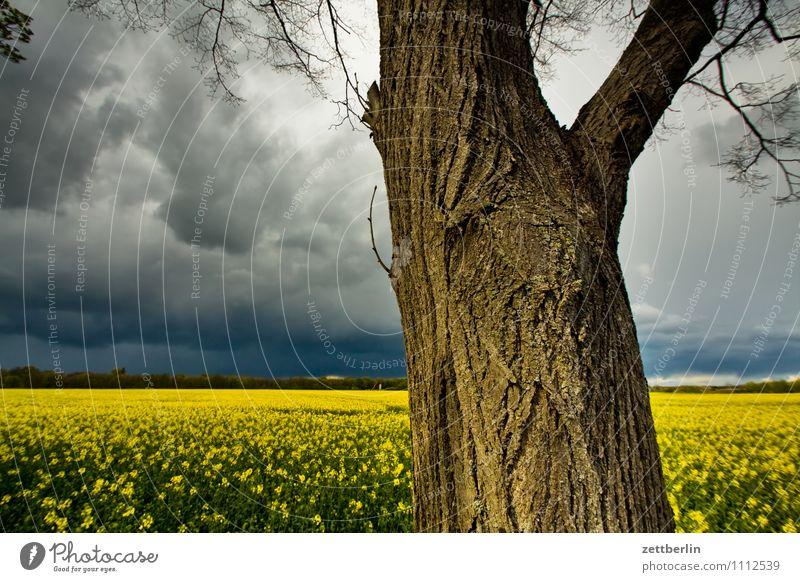 Baum, Raps, Gewitter Ausflug Frühling Himmel Park Tourismus Wetter Wolken Feld Rapsfeld Landwirtschaft Baumstamm Horizont Ferne Regen Meteorologie Wetterdienst