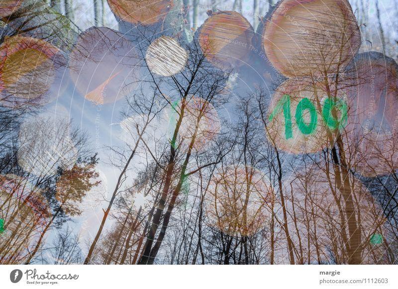 100 Erholung Natur Himmel Frühling Herbst Schönes Wetter Pflanze Baum Grünpflanze Wald Holz Wachstum grün Schutz ruhig Wandel & Veränderung Landschaft Baumstamm