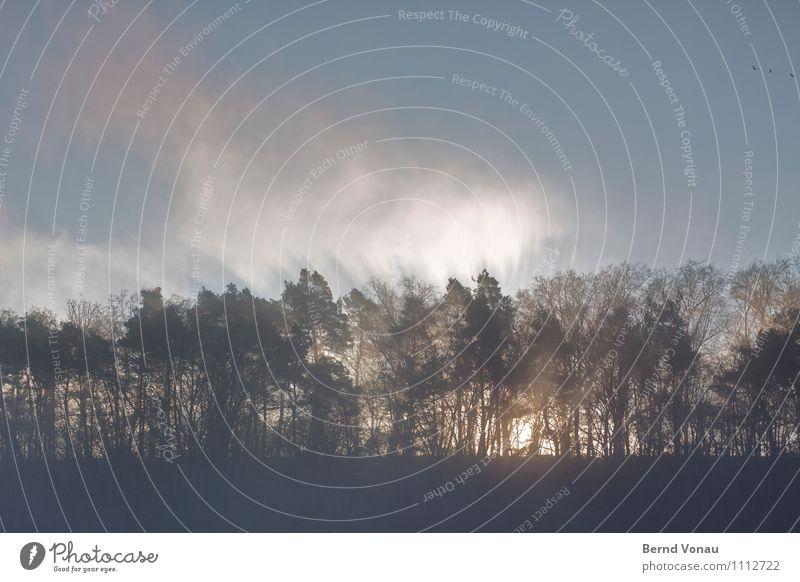 Waldbrand Umwelt Natur Landschaft Himmel Sonnenaufgang Sonnenuntergang Sommer Pflanze Baum Gefühle Stimmung Beginn gewaltig dramatisch Nebel stark Spaziergang