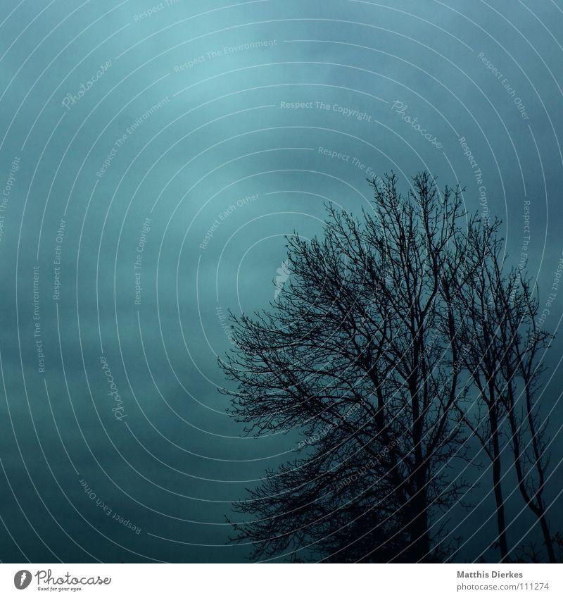 Nebel II Herbst Baum laublos Wolken Endzeitstimmung verweht vergangen Vergänglichkeit Beerdigung Trauer Tragödie Wetterumschwung Herbstwetter Regen Panik