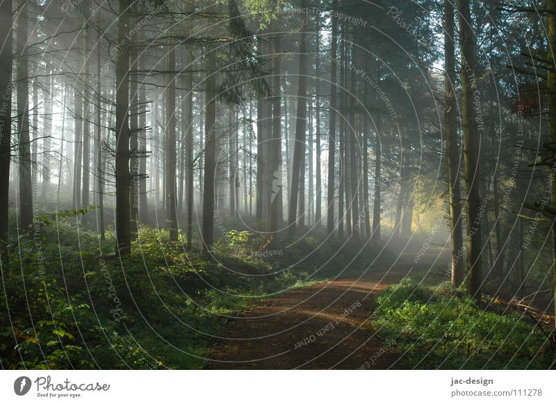 die Sonne durchdringt den Nebel ruhig Wald Herbst Nebel Wetter November Morgennebel
