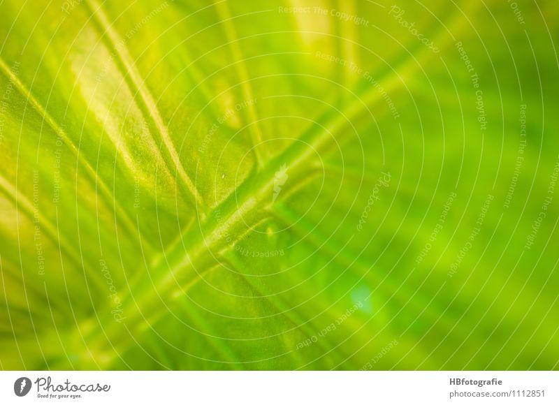 Blattstruktur Natur Ferien & Urlaub & Reisen Pflanze Meer gelb grau träumen Insel exotisch Blattadern Pflanzenteile