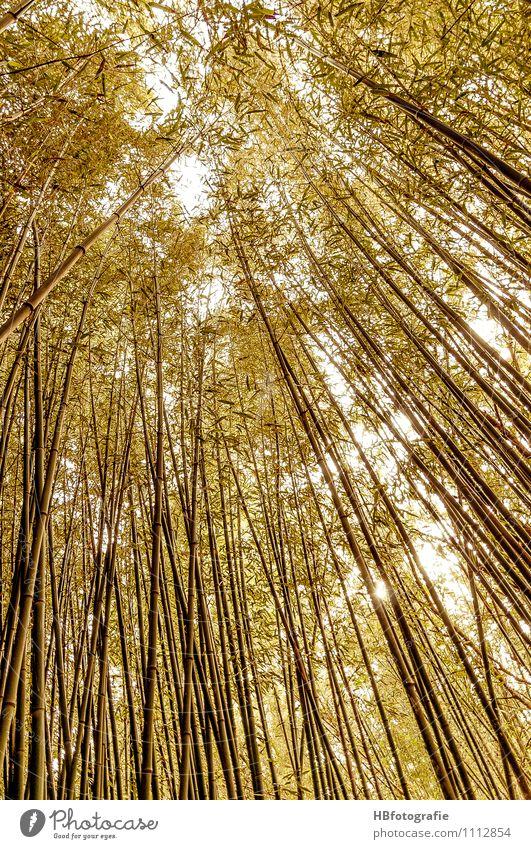 Bambuswald Ferien & Urlaub & Reisen Meer Insel Umwelt Natur Pflanze Sträucher Grünpflanze Bambusrohr grün Stimmung Wellness mediterran hoch gewachsen Farbfoto