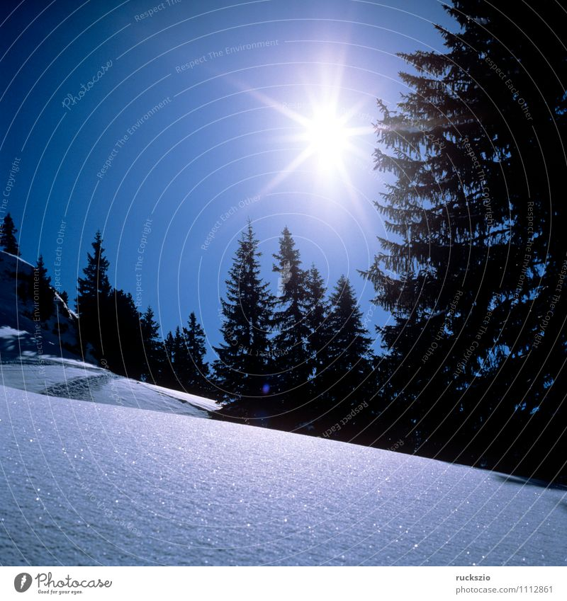 Wintersonne, Landschaft, Arlberg blau Sonne kalt Berge u. Gebirge Frost Alpen Tanne Österreich Blauer Himmel Schnellzug Bundesland Tirol Raureif Eindruck