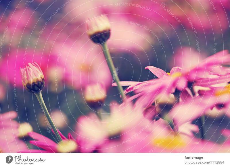 rose collection Natur Pflanze Frühling Sommer Blume Blüte Garten Park Wiese schön rosa Blühend pink gelb Flowerpower herausragen 2 Blütenstiel Blumenwiese
