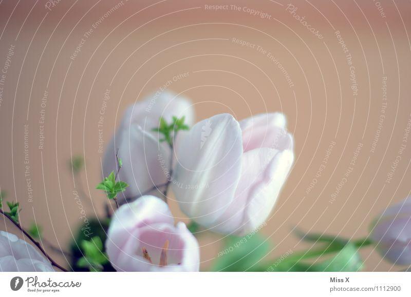 Tulpen Frühling Blume Blüte Blühend rosa Blumenstrauß Muttertag Ast Blütenknospen Blattknospe Farbfoto mehrfarbig Innenaufnahme Nahaufnahme Menschenleer