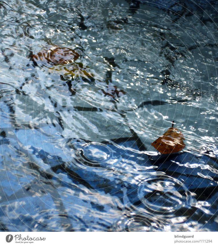 ... SWALLOW grün Spielen Wolken nass feucht dunkel Licht glänzend Luft Blatt Baum Sträucher Regenmantel Schutzbekleidung Regenschirm Platz Mosaik fließen Kreis