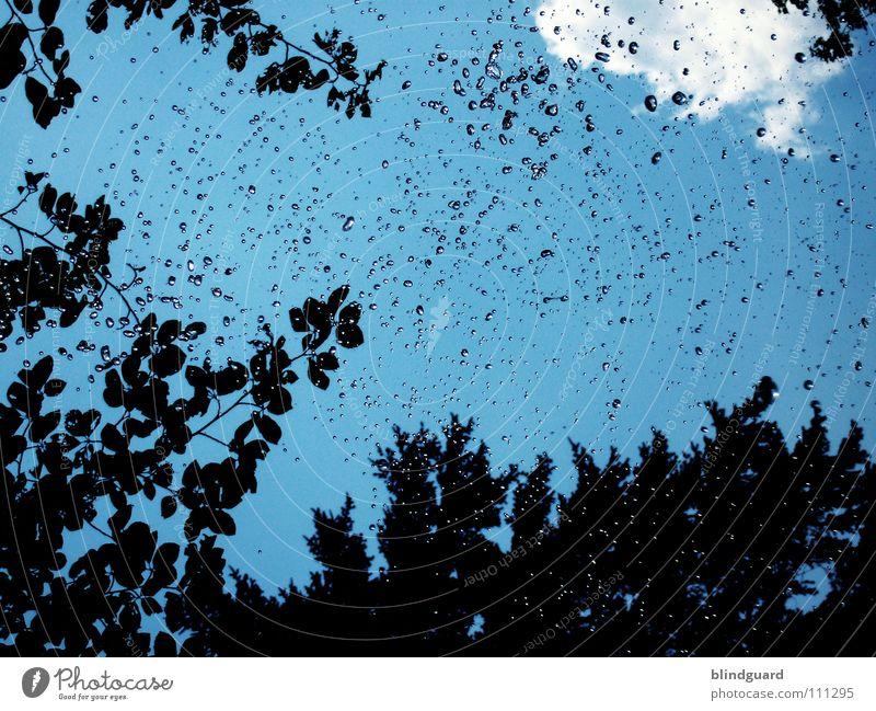 SPIT or ... Wald grün Spielen Wolken nass feucht dunkel glänzend Luft Himmel Blatt Baum Sträucher Regenmantel Schutzbekleidung Regenschirm Platz Wasser Sommer